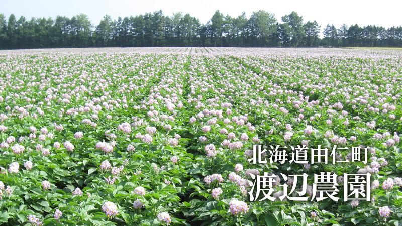 北海道由仁町 渡辺農園