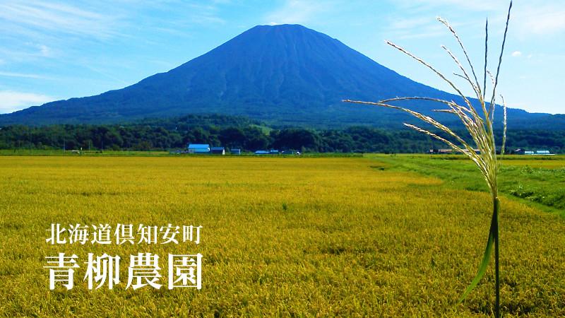 北海道倶知安町 青柳農園