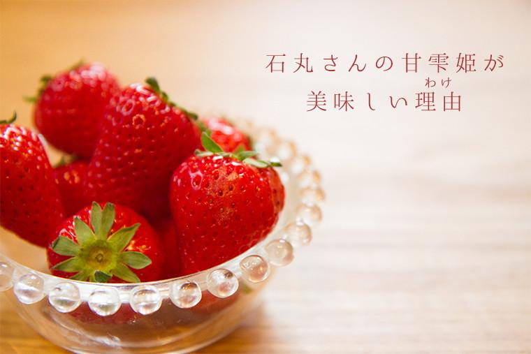 石丸さんの甘雫姫が美味しい理由