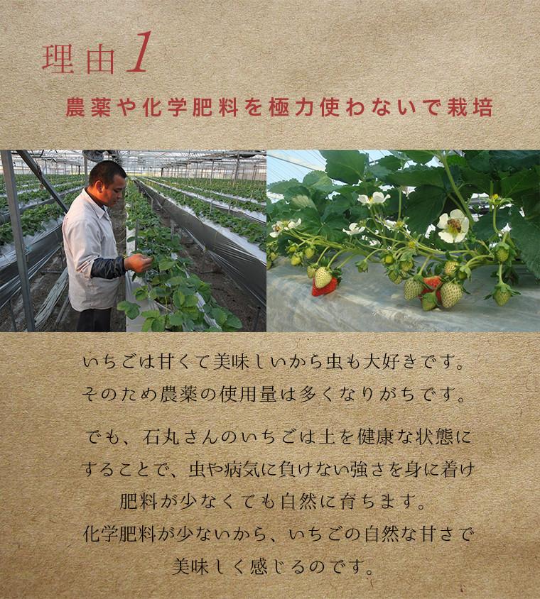 農薬や肥料を極力使わないで栽培
