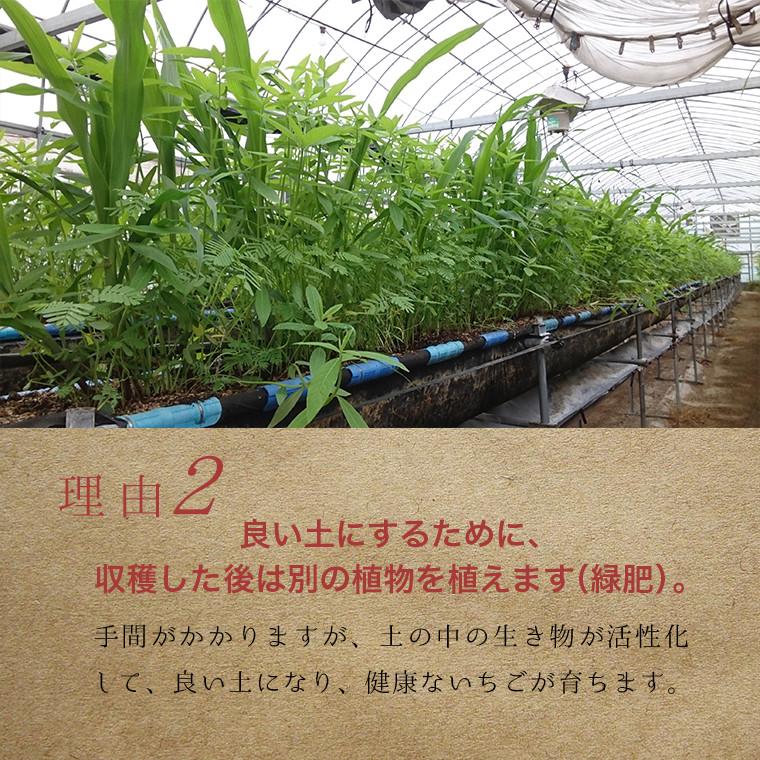 良い土にするために、収穫した後は別の植物を植えます