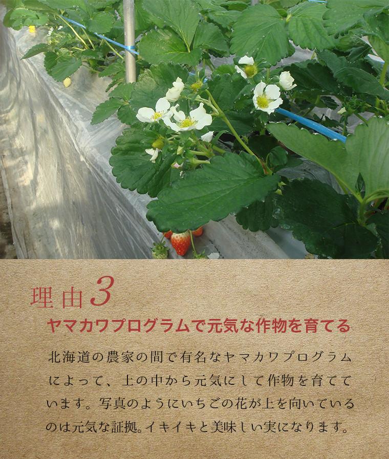 ヤマカワプログラムで元気な作物を育てる