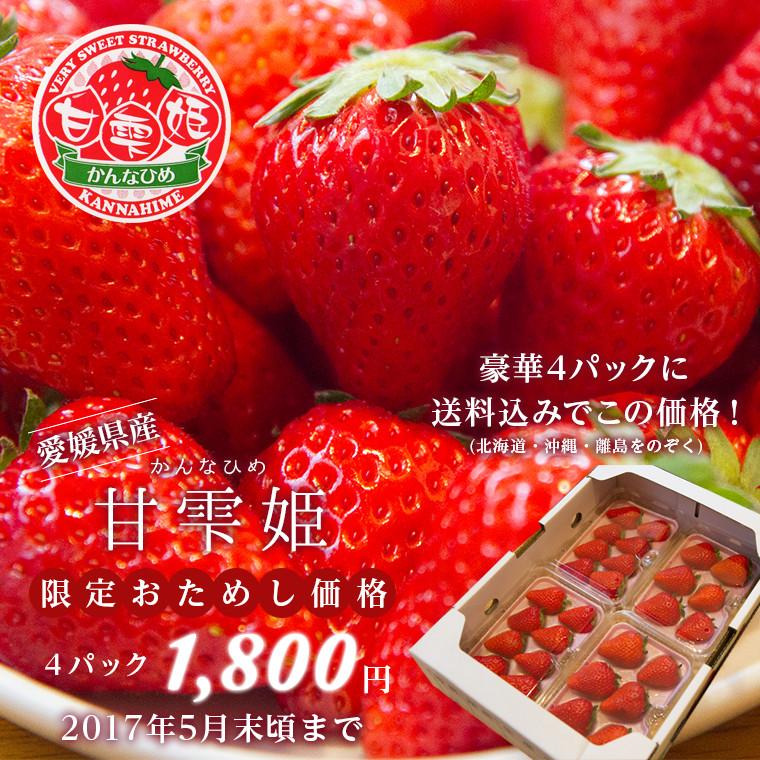 愛媛県産 いちご 甘雫姫(かんなひめ) 限定お試し価格1,800円(送料込み)