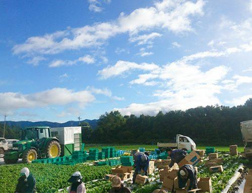 長野県川上村の葉物屋の農園案内を掲載しました